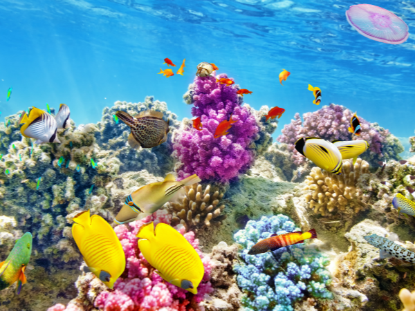 family travel snorkelling, scuba diving for kids, family travel adventure